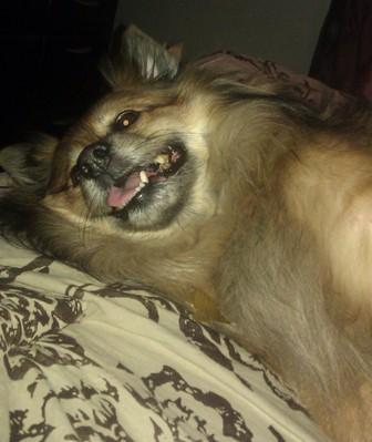 dog-3a